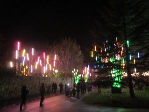 Garden of Light (Durham Lumiere 2015)