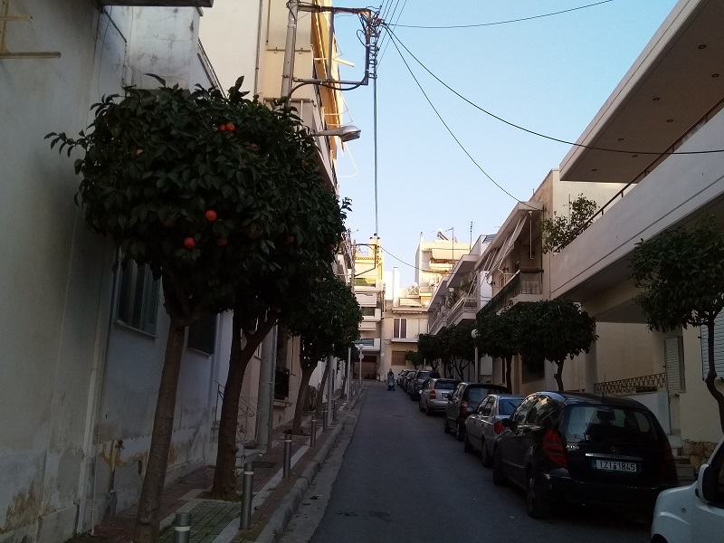 Athens: A City Where Orange Trees Line the Streets