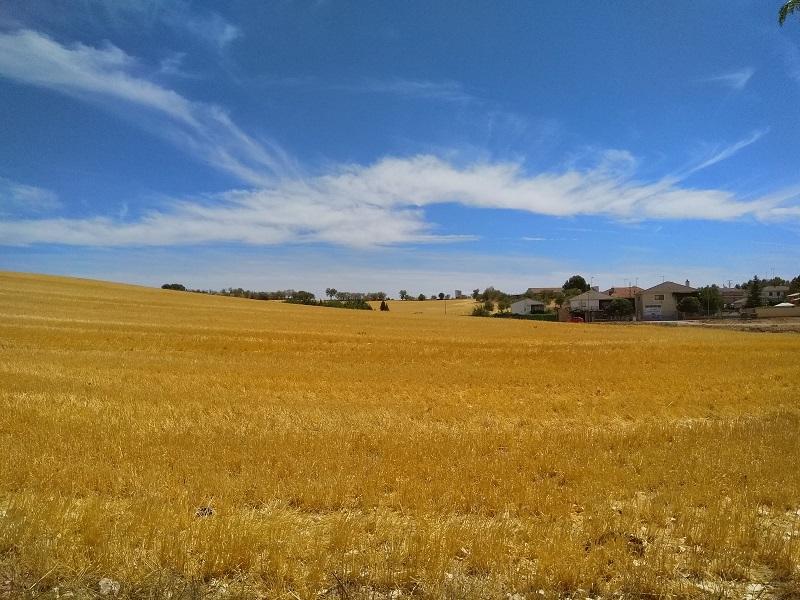 Fantastic View of Cornfields at Mondéjar, Spain